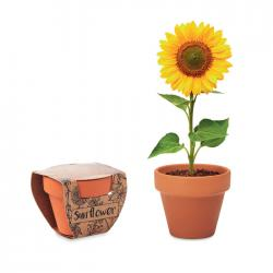 Terracotta pot '' Sunflower