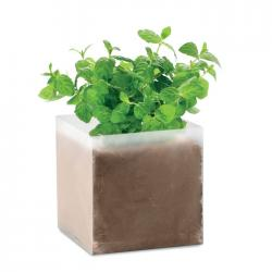 Compost with seeds Mint